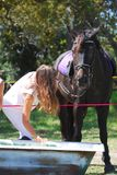 Horse drinking. You can take a horse to the water but you can't make him drink Royalty Free Stock Photography