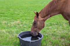 Horse with drinking water Stock Photos