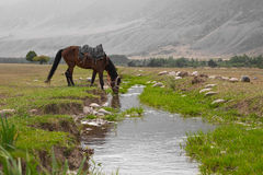 Horse drinks water from the creek Royalty Free Stock Photography