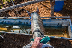 Horse drinks water from a water tank - Rider first person pov Royalty Free Stock Photos