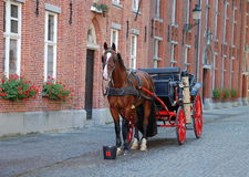 Horse-driven cab in Bruges. Horse-driven cab - a beautiful horse hitched to a four wheel horse carriage.This is one of the main tourist attractions in the Stock Images