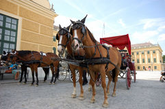 Horse driven cabs royalty free stock photo