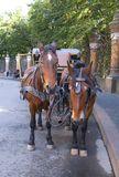 Horse-driven carriage Royalty Free Stock Image