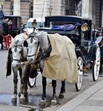 Horse-driven carriage Stock Photo