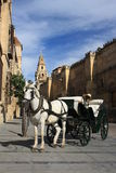 Horse driven carriage in Cordoba Stock Photography