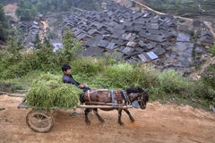 Horse driven carriage with hay and chinese farmers. Stock Photo