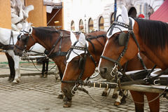 Horse-driven carriage at Hofburg palace, Vienna, Austria Royalty Free Stock Photography