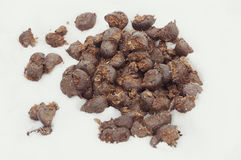 Horse droppings Royalty Free Stock Image