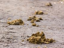 Horse droppings Royalty Free Stock Photography