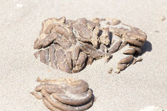 Horse droppings in the sand Royalty Free Stock Photos