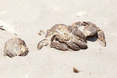 Horse droppings in the sand Stock Photo