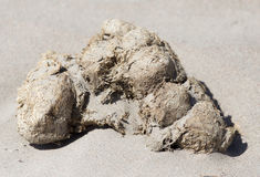 Horse droppings in the sand Royalty Free Stock Photography