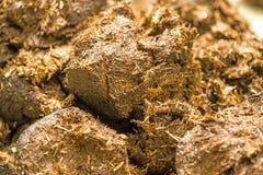 Horse dung,  closeup Royalty Free Stock Image