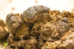 Horse dung,  closeup Stock Images