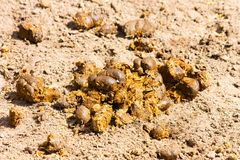 Horse dung Royalty Free Stock Image