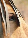 Horse at Dusk Stock Image