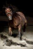 Horse in dust Stock Photos