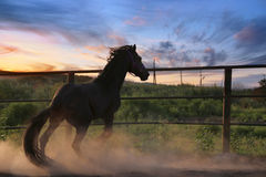 Horse in the dust Royalty Free Stock Photos