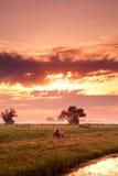 Horse on Dutch pasture at sunrise Royalty Free Stock Image