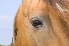 horse'e眼睛 库存图片