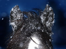 Horse Ears In The Snow Royalty Free Stock Photos