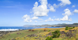 Horse in Easter Island, Chile Royalty Free Stock Images