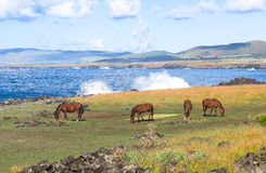 Horse in Easter Island, Chile Stock Photos