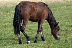 Horse eat a grass. Horse are grazed on a meadow stock photos