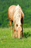 Horse. Eat grass in meadow Stock Image