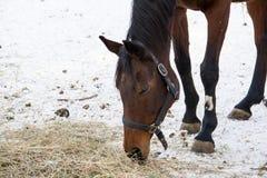 Horse eat Royalty Free Stock Photos