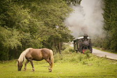 Horse eatigh in forest with vintage train in background Stock Photo
