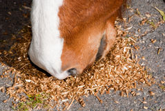 Horse eating Stock Image