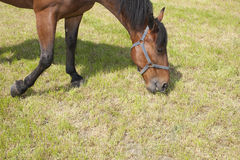 Horse is eating Stock Photography