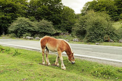 Horse. Eating along the road Royalty Free Stock Image