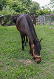 Horse eating stock images