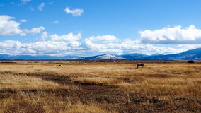 Horse eating autumn  grass with golden afternoon Colorado landscape. Beautiful golden Autumn landscape of Colorado, clouds formation Stock Images