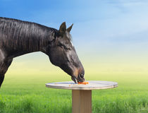 Horse eating carrots on table royalty free stock images