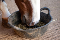 Horse eating feed from a bucket Royalty Free Stock Images
