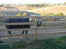 Horse eating from fence feeder Royalty Free Stock Photos