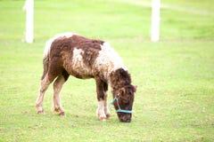 Horse eating food greensward Stock Image
