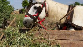 Horse eating grass from a cart. (Dobrogea-Romania stock footage