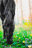 Horse eating grass in the forest, shallow DOF focus on eyes royalty free stock photos