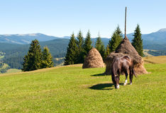 A horse eating grass on a green pasture Royalty Free Stock Photo