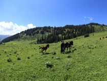 Horse eating grass. On beautiful mountain grassland Royalty Free Stock Images