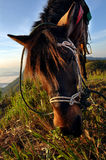 Horse eating grass on the mountain Stock Image