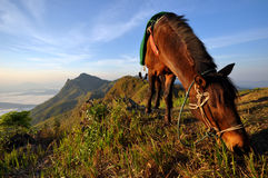 Horse eating grass on the mountain Royalty Free Stock Image