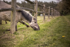Horse eating grass. Outside of the meadow Stock Photos