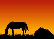 Horse eating grass at sunset near stable Royalty Free Stock Images