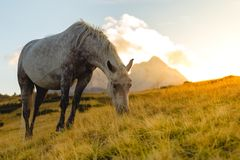 Horse eating grass in the wild. At mountain Komovi, Montenegro Stock Photography