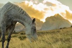Horse eating grass in the wild. At mountain Komovi, Montenegro Royalty Free Stock Photography